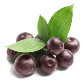 acai berry ingredient of health supplements