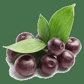 AçaÌ Berry